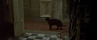 black cat from the deja vu scene in THE MATRIX