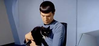 Spock with a cat! from caster.com