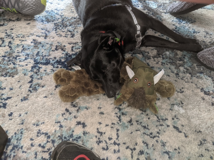 my little black dog asleep on a toy