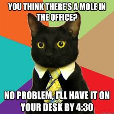 """Office cat meme says """"You think there's a mole in the office? no problem, I'll have it on your desk by 4:30"""""""
