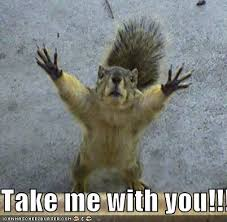 "Squirrel with its hands up going ""take me with you!!"""