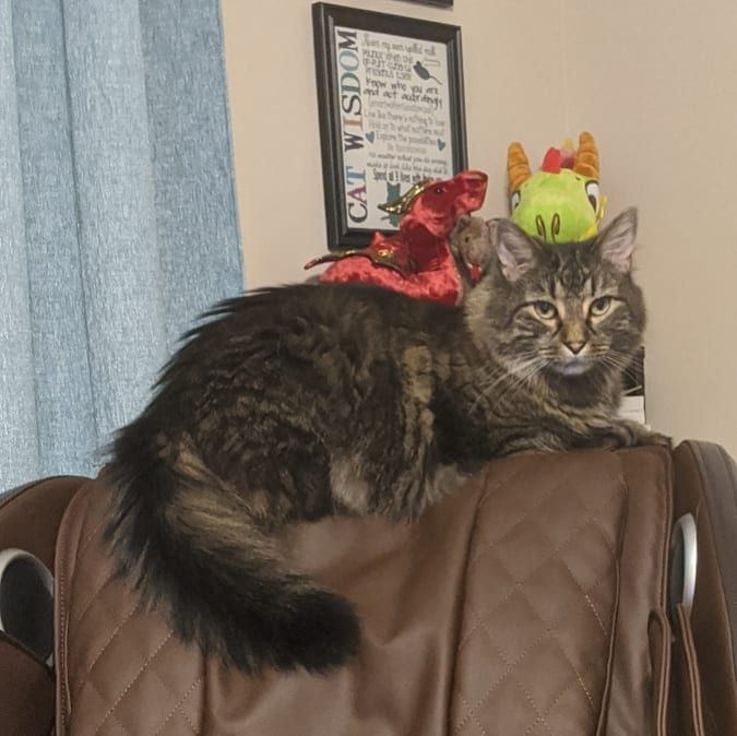 My large, fluffy brown Main Coon sitting on top of a chair