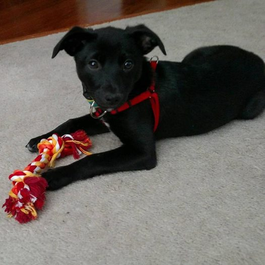 My black dog when he was just a few months old