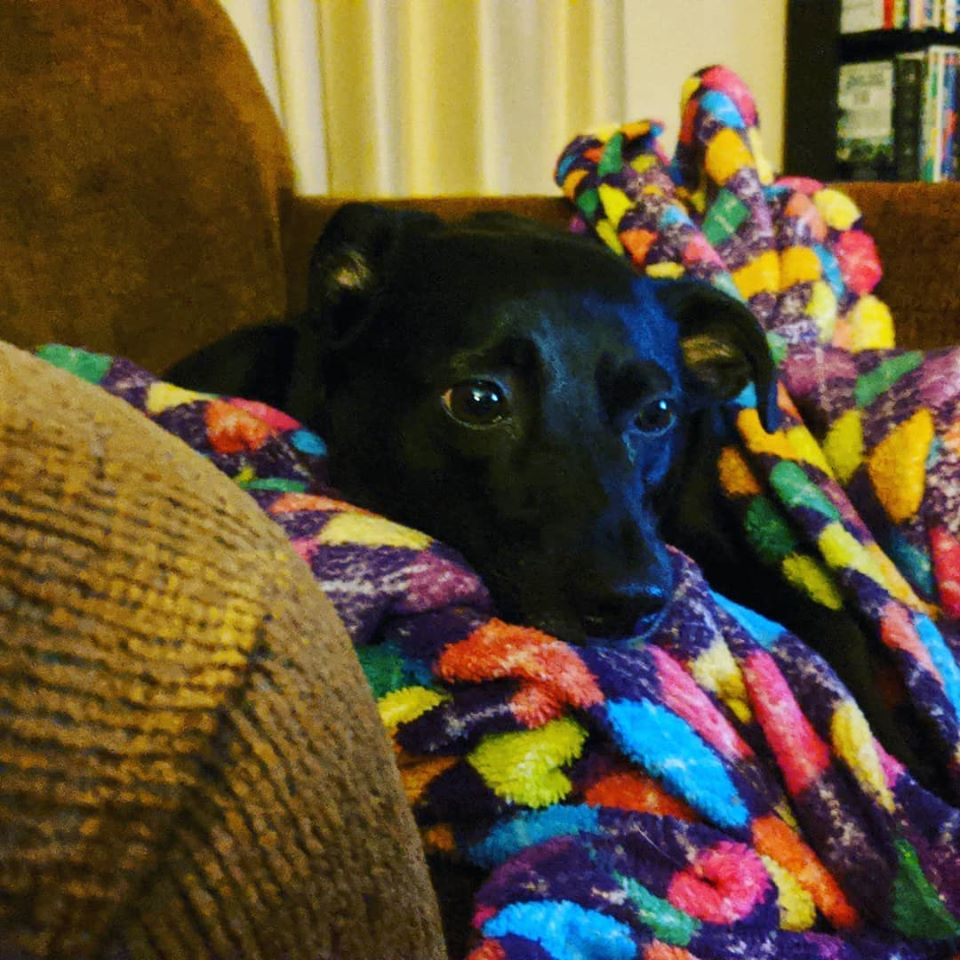My little black dog (well he's 30 pounds) sleeps on a multicolored blanket.