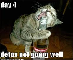 day 4, detox not going well (a cat trying to drink out of a beer bottle)
