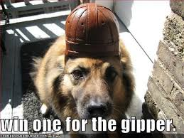 "A dog with a helmet on ""win one for the gipper"""