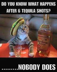 """a cat sitting with a bottle of tequila """"do you know what happens after 6 tequila shots? nobody does."""""""