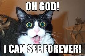 """A cat with large eyes """"Oh God! I can see forever!"""""""
