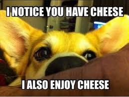 "A dog says ""I notice you have cheese. I also enjoy cheese."""