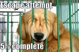 escape attempt, 5% complete - a dog trying to break out of it's pen