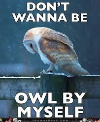 don't wanna be owl by myself