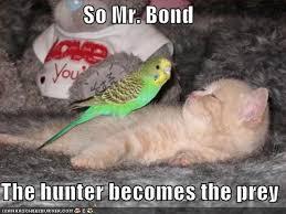 So Mr. Bond, the hunter becomes the prey - a bird atop a cat