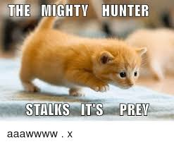 "a small cat - ""the mighty hunter stalks its prey"""