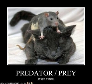 predator/prey - ur doing it wrong (squirrel on top of a cat)