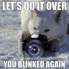 let's do it over, you blinked again (says a fox behind a camera)