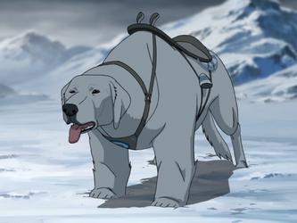 Naga, the polar bear-dog