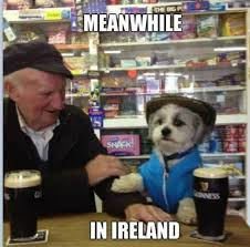 meanwhile in Ireland... (dog and man at the pub with Guiness)