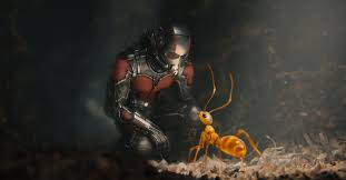 ant-man in suit looking at one of the ants